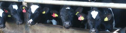 Irish Farm to Farm Agency