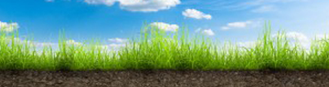 farm grazing tips