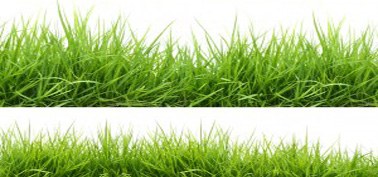 Grass planning