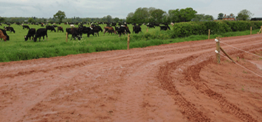 Dairy Farm Roadway Design