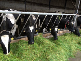 livestock for sale Ireland and the UK