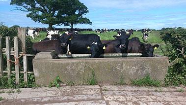 farm schemes in Ireland